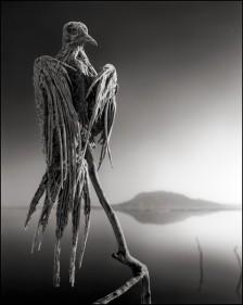 lakenatronbird